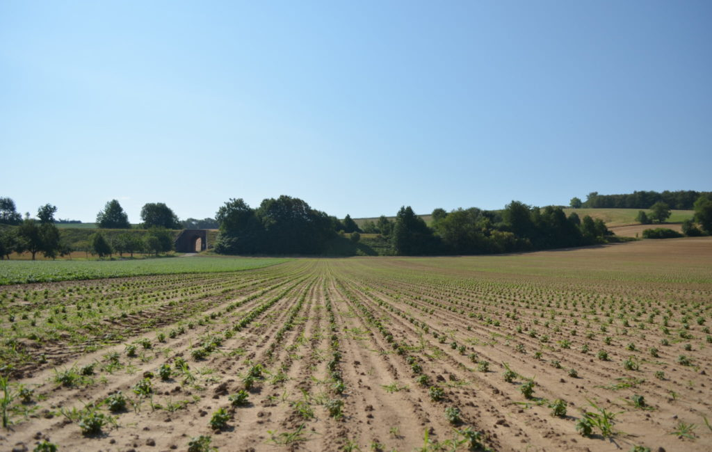 Cultivation: Medicinal Plant Farm in Germany