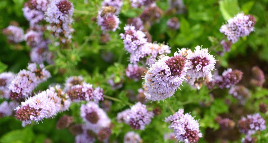 What Herb Teachers Can Do