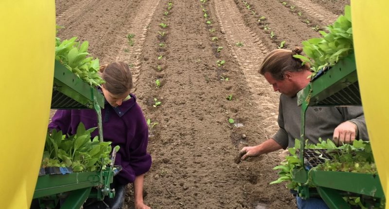 The Supply Chain: Cultivation