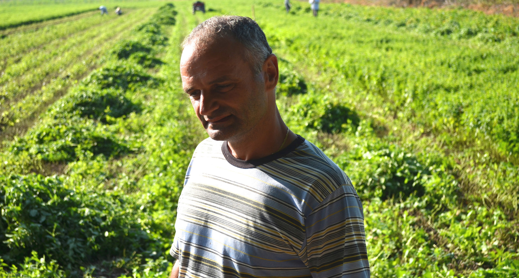 Cultivating Medicinal Plants in Bulgaria