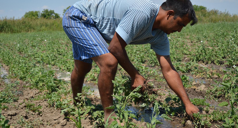 Cultivating Medicinal Plants in Bulgaria