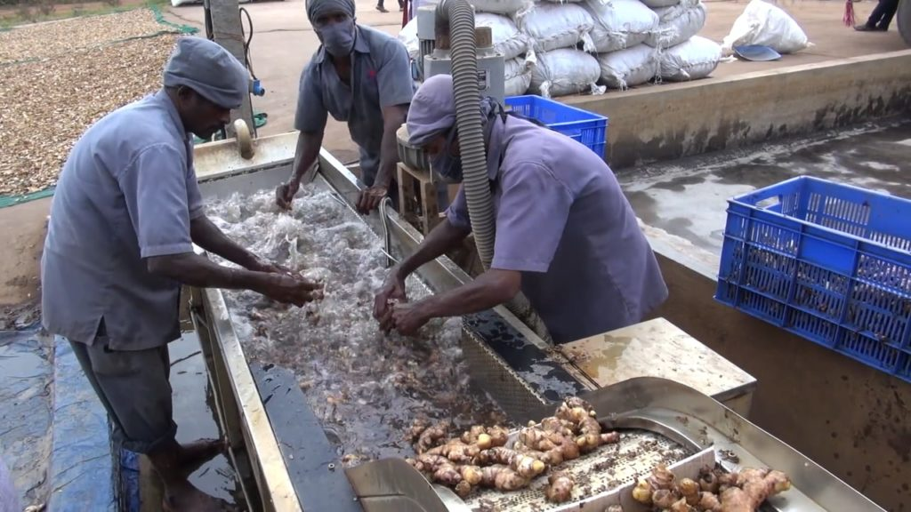 Processing Ginger Video