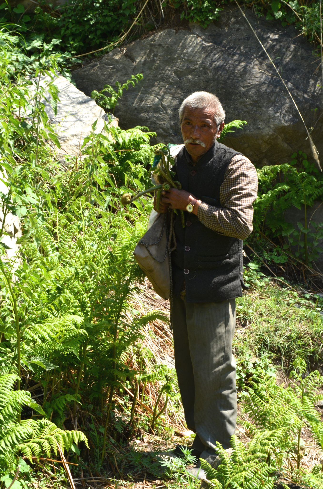 Images of men and women growing and collecting medicinal plants