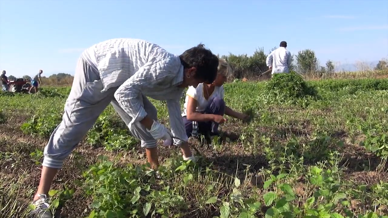 Sustainable Herbs Project Videos: Cultivating Herbs in Bulgaria
