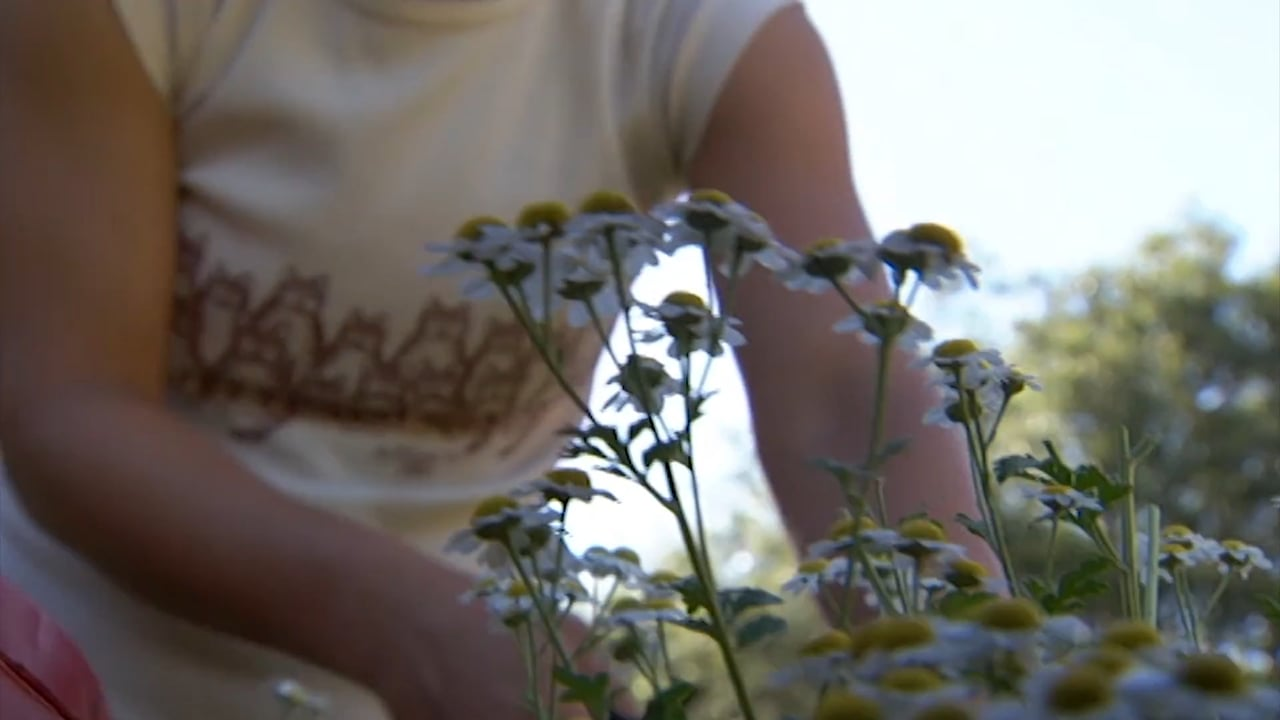 Sustainable Herbs Project Videos: Issues in the Herb Industry