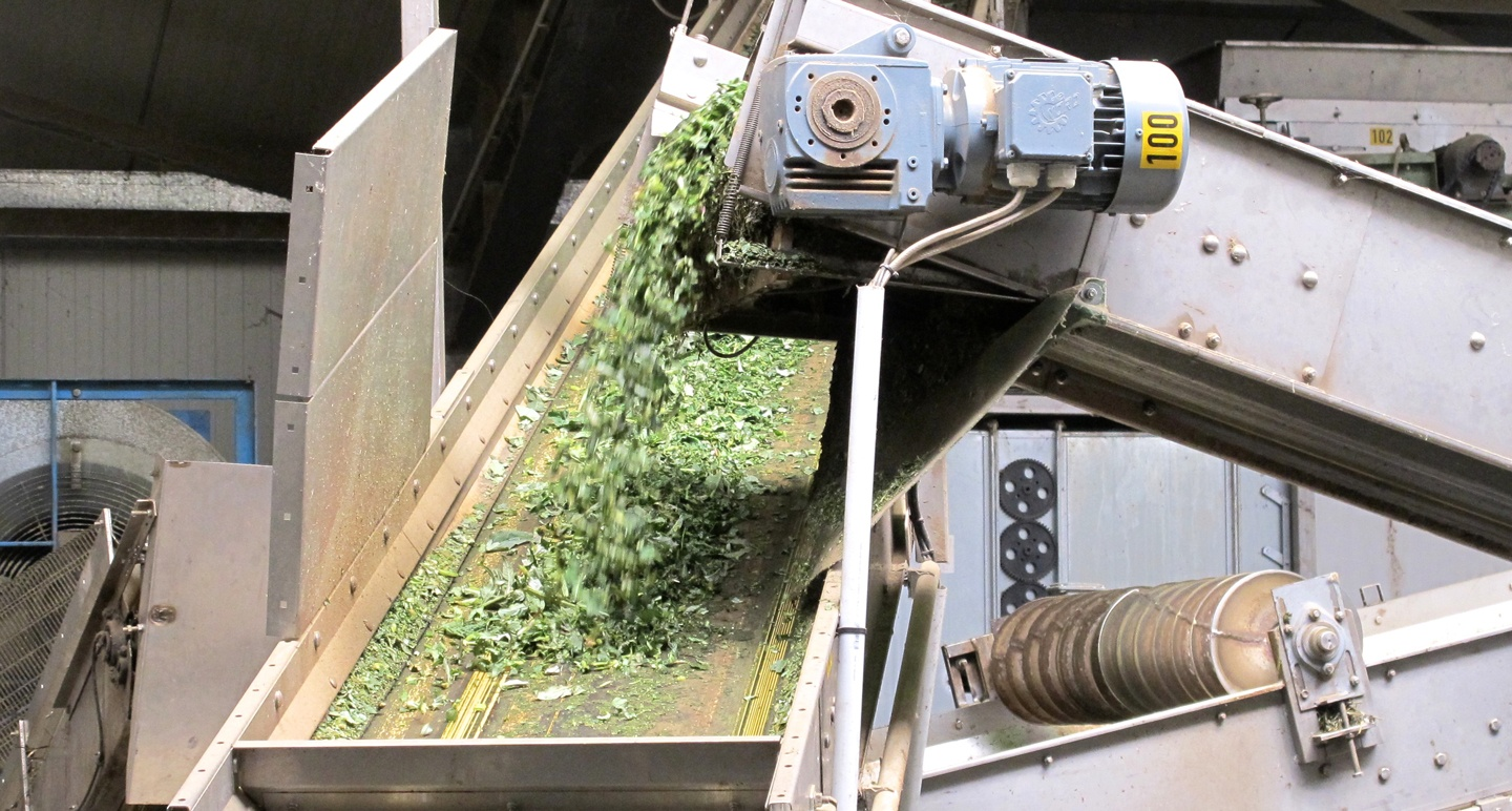Primary Processing: Drying Medicinal Plants in Germany
