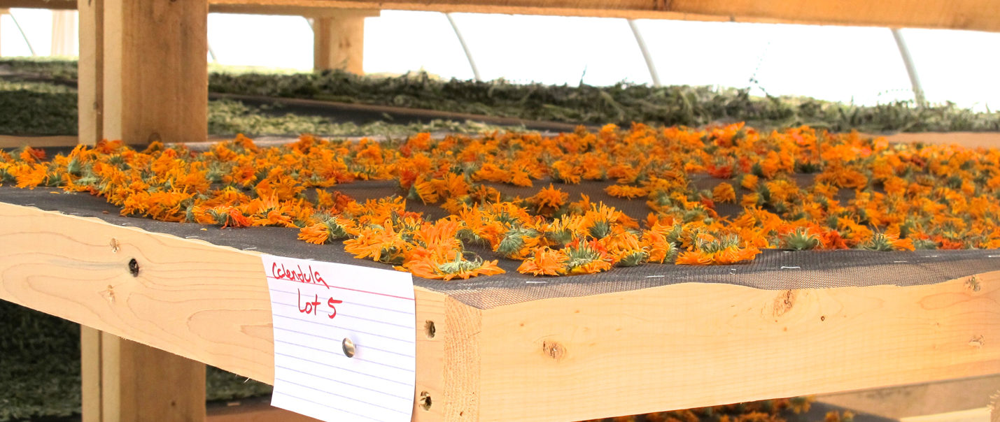 Quality and Sustainability in the Herb Industry