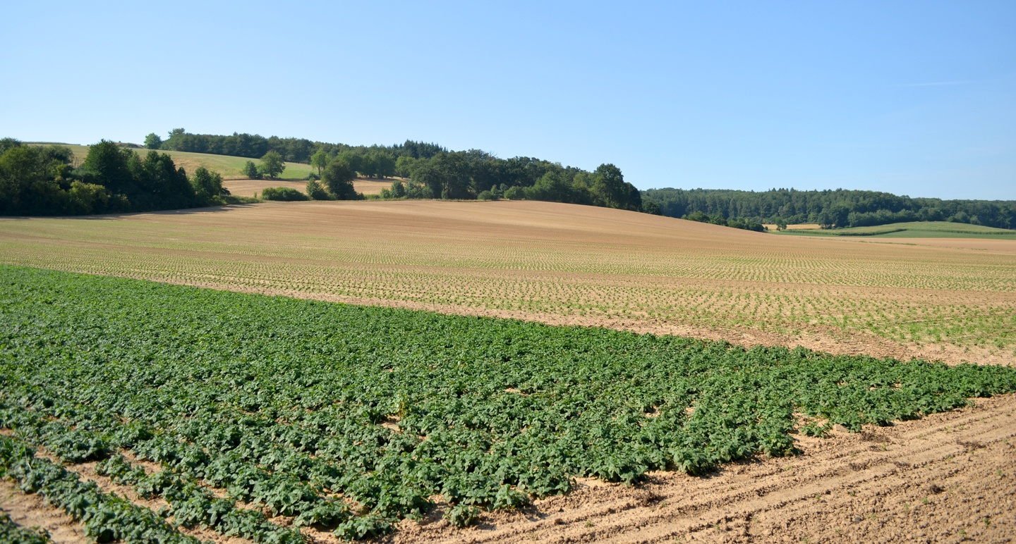 Production: Cultivation of Medicinal Plants in Germany