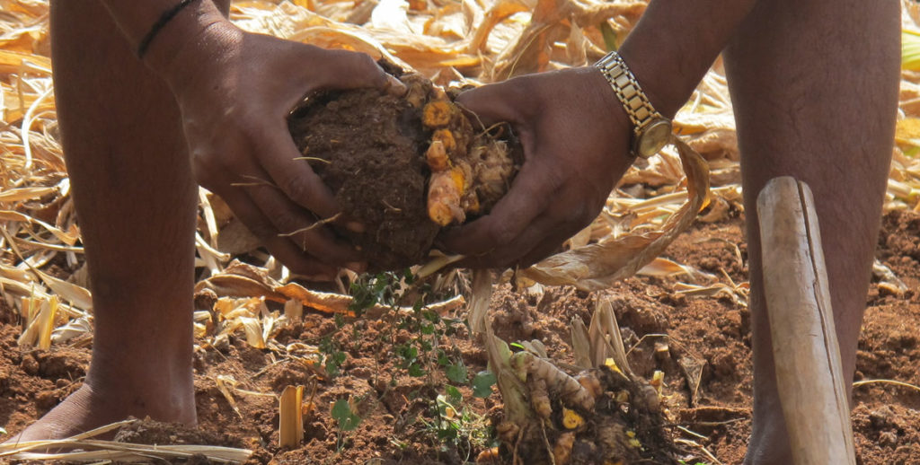 A deeper look into the medicinal plant supply chain