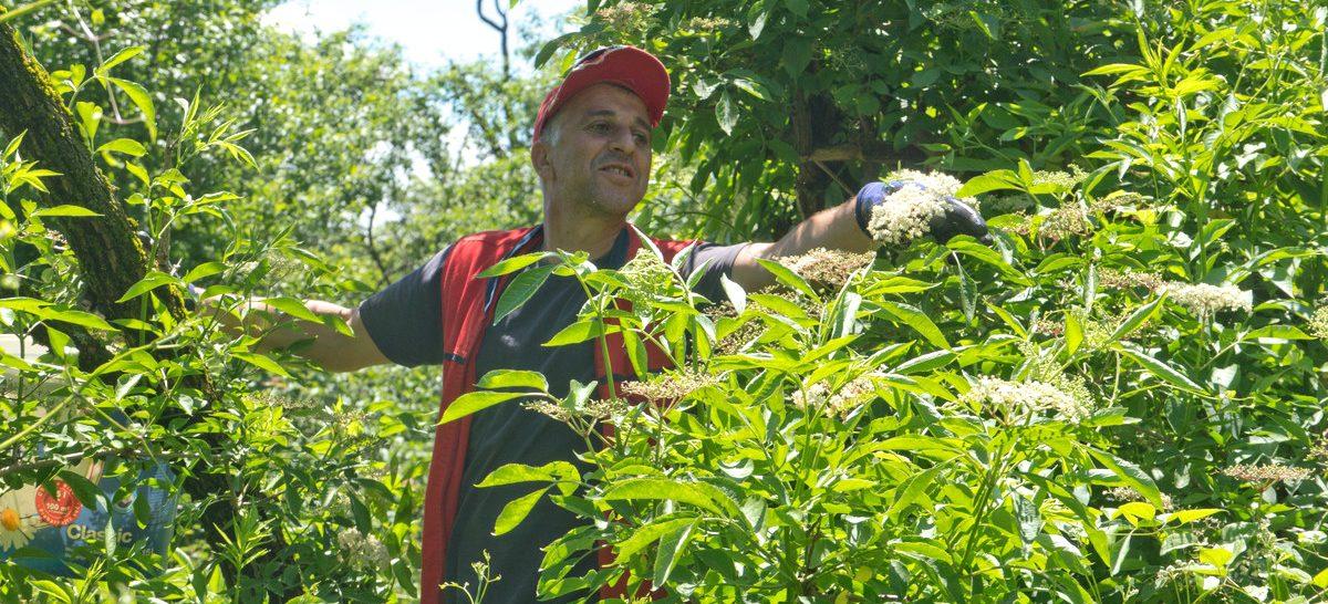 Biodiversity and Wild Herbs