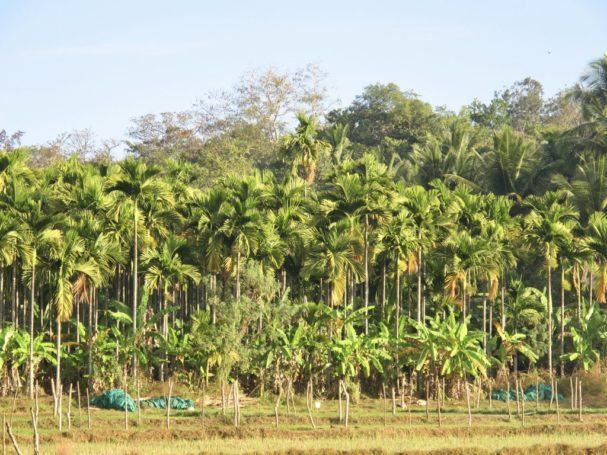 Hosagunda Farm, Karnataka, India