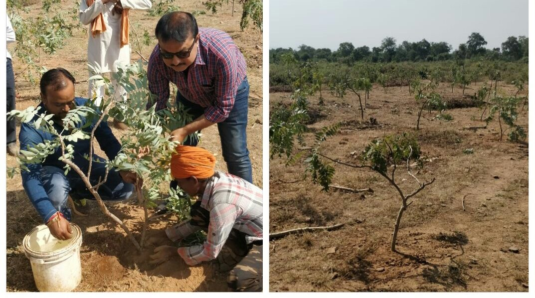 SHP interviews Verdure Sciences about planting Boswellia trees as a way to ensure a future supply of the gum resin harvested from these trees.