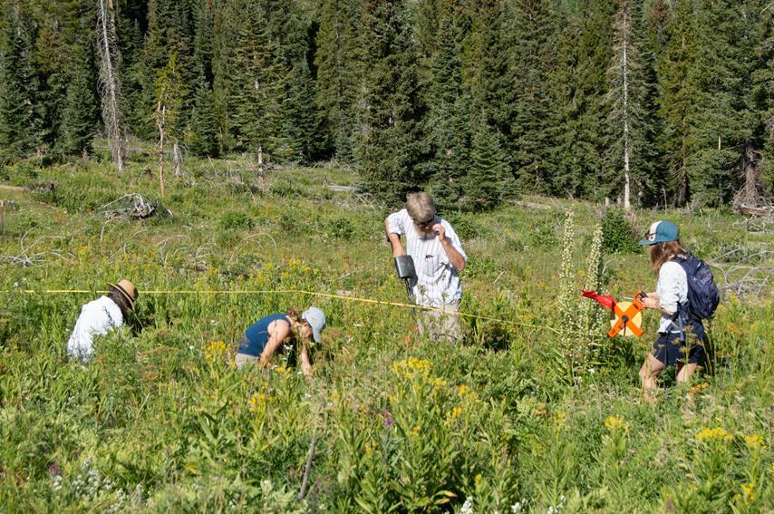Monitoring harvest plots of oshá.
