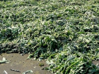 Waste in the Botanical Industry