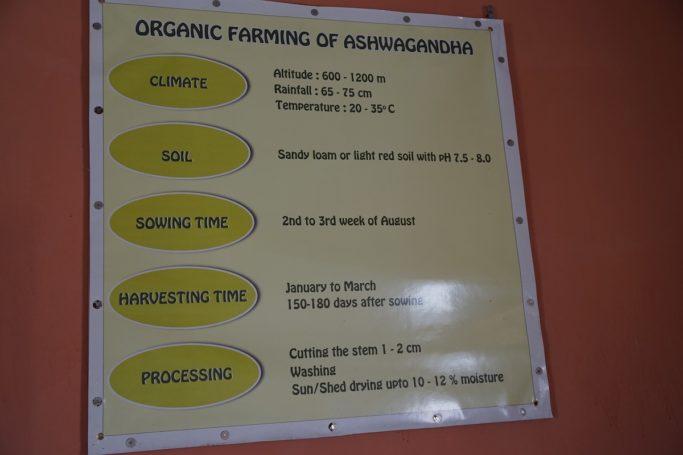 ashwagandha cultivation schedule