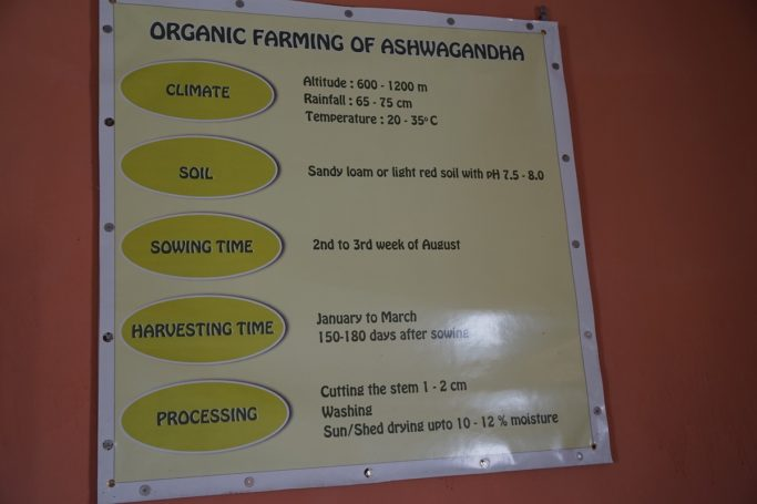 ashwagandha cultivation schedule