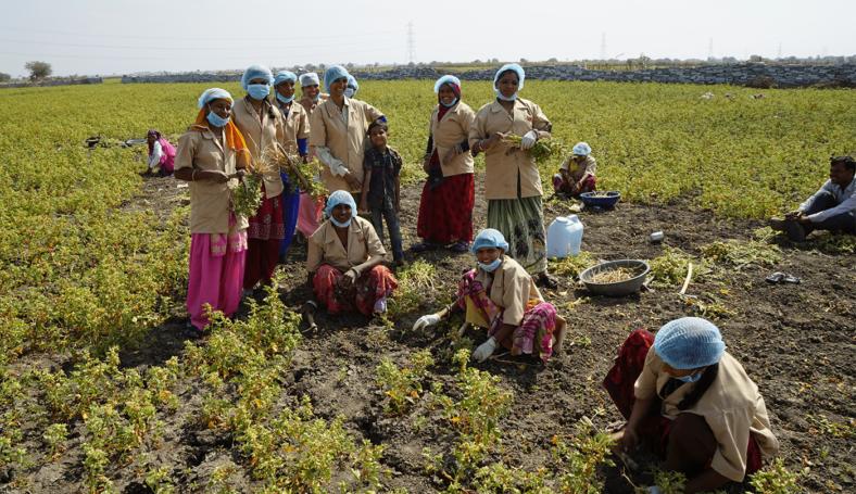 Ashwagandha promotes jobs for women.
