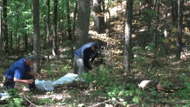 Wildcrafting in Appalachia