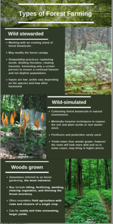 Forest Botanicals Week