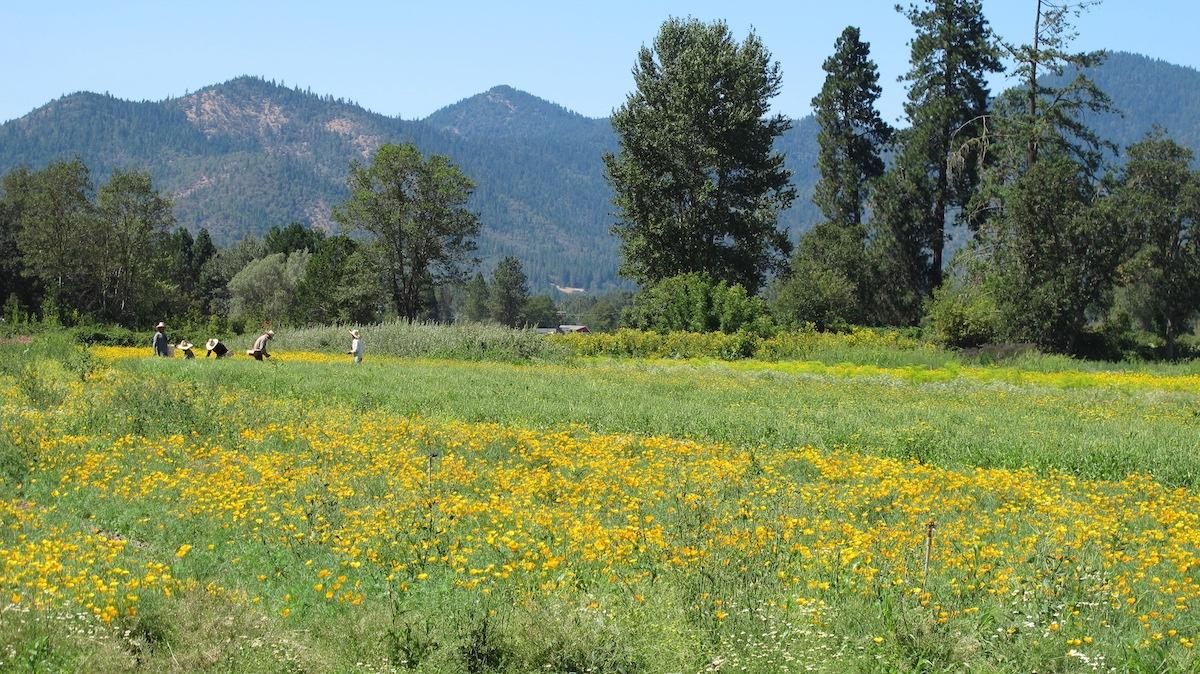 Regenerative Farming on Family Owned Farms