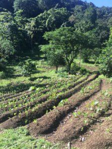Regenerative Farming in Costa Rica